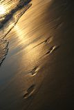Golden sunset prints on beach. Photograph of foot prints in the wet sand of a beach at sunset with the golden reflection of the sun in the rolling waves Stock Photo