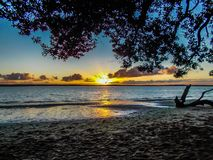 Sunsetting on beach, Point Chevalier, Auckland, New Zealand. Golden sunset setting on a beach with trees in the foreground Royalty Free Stock Photos
