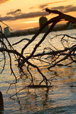 Golden Sunset with silhouette. Golden sunset over the water royalty free stock photo