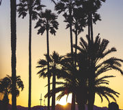 Golden sunset with sun flare among the Croisette`s palm trees in Stock Photography