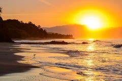 Golden sunset/sunrise shoreline 2. A wading bird walking in a golden sunset/sunrise with waves washing against the  shoreline Stock Photos