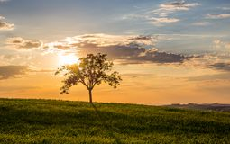 Golden sunset in Tuscany Royalty Free Stock Photos