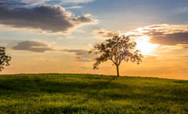 Golden sunset in Tuscany Stock Image