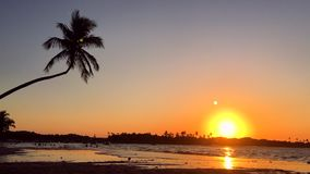 Golden sunset with palm tree on Brazilian beach. Golden sunset with waves crashing in slow motion under the silhouette of a palm tree on tropical Brazilian beach stock video