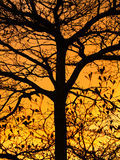 Golden Sunshine and Beautiful Silhouette of Tree Royalty Free Stock Photography