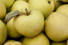 Golden Supreme Apples Stock Photography