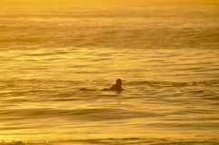 Golden Surfer Royalty Free Stock Image