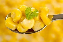 Golden sweet corn Stock Images