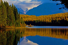 GOLDEN TAMARACKS REFLECTED Stock Photo