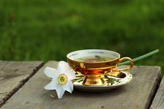 Herbal tea in golden cup, white daffodil lying on saucer stock image