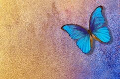 Golden texture background. watercolor paper painted in gold paint. watercolor paper texture. bright morpho butterfly on a golden b