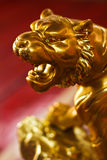 Golden Tiger. Background red in shrine royalty free stock images