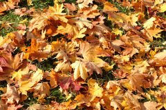 Golden time of year Royalty Free Stock Image