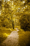 Golden tree. Golden colorized Garden path , emotional landscape Royalty Free Stock Image