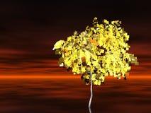 Golden tree. Beautiful golden tree standing alone Stock Photography