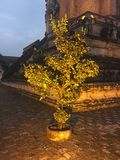 Golden tree at the corner of the ancient pagoda. royalty free stock photos