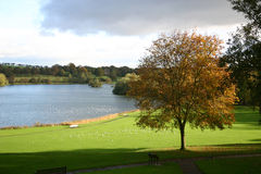 Golden tree. By lake in scotland Royalty Free Stock Photography