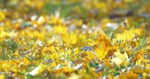 Golden Tree Leaves On Ground In Autumn. Season stock video footage