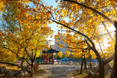 The golden tree leaves and pavilion sunset. The photo was taken in Tieren Square Daqing city Heilongjiang province,China stock photos