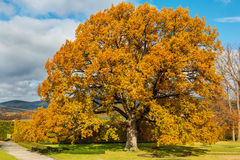 Golden tree Stock Photo