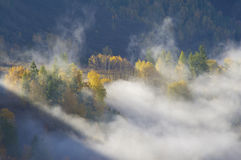 Golden trees in fog Royalty Free Stock Photography