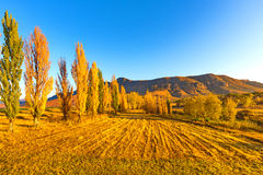 Golden trees at golden hour. Clarens - South Africa Royalty Free Stock Images