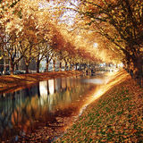 Golden Trees Reflecting in the canal. Autumn photo Royalty Free Stock Photos