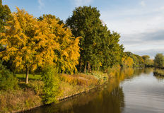 Golden trees at the river banks in autumn Stock Photos