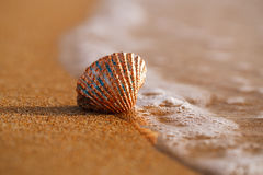 Golden tropical shell on sea beach with waves under sunrise sun Royalty Free Stock Images
