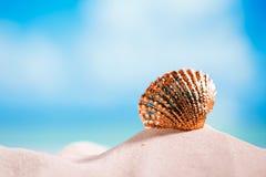 Golden  tropical shell on white beach sand under sun light Royalty Free Stock Photos