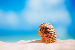 Golden  tropical shell on white beach sand under sun light Royalty Free Stock Photo