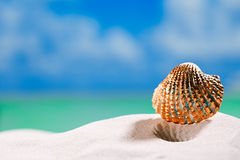 Golden  tropical shell on white beach sand under sun light Royalty Free Stock Images