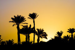 Golden Tropical Sunset in Africa Royalty Free Stock Image