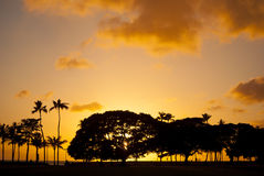 Golden Tropical Sunset Stock Photo
