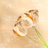 Golden tulip flowers over blurred background Stock Photos