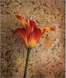 Golden Tulip w zmierzchu prezent dla wakacji i świętowań royalty ilustracja