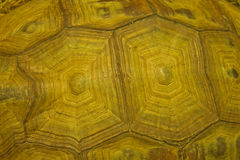 Golden turtle shell Stock Photography