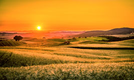 Golden tuscan sunset Stock Images
