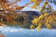 Golden und Orange verlässt über dem gebluteten See, Slowenien Stockfotografie