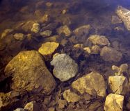 Golden Underwater Rocks and Leaves. Rocks and leaves underwater take on golden hue Royalty Free Stock Photography