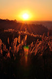 Golden valley. Sunset at the valley of Grasslands Royalty Free Stock Photos