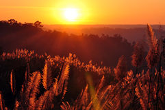 Golden valley. Sunset at the valley of Grasslands Stock Photo