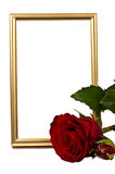 Golden verticaly staying frame behind the red rose Royalty Free Stock Photo