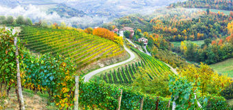 Golden vineyards of Piemonte. Italy. Autumn landscape . vineyards and scenic countryside of Piemonte, Italy royalty free stock photography