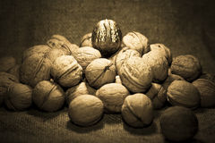 Golden walnut Stock Image