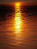 Golden water 1. Lake's water reflected sunbeams at the sunset Royalty Free Stock Image