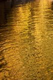 Golden Water Stock Image