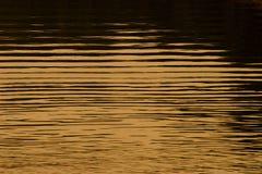 Golden water Stock Photos