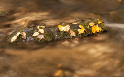 Golden Water and Gold Leaves Stock Images