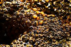 Golden water. magic bubbles, background. The Golden water. magic bubbles, background Royalty Free Stock Photo